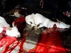 Сцены убийств животных мотивируют к вегетарианству